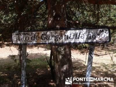 Senderismo Cueva Valiente - Alto de Gargantilla; senderismo alcala de henares